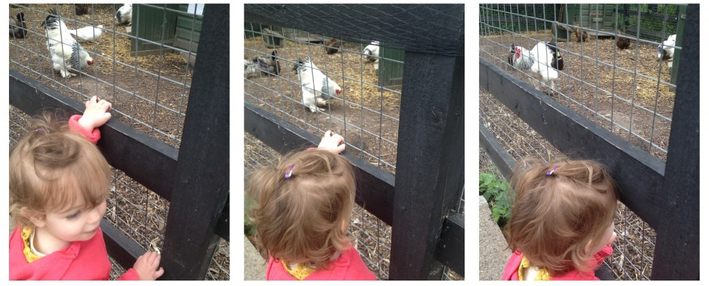 Crystal Palace Park Farm - why Crystal Palace Farm is great for babies and toddlers in London
