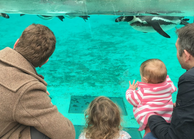 Penguin enclosure at London Zoo