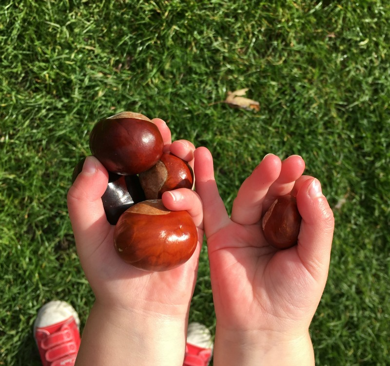 Hands holding conkers