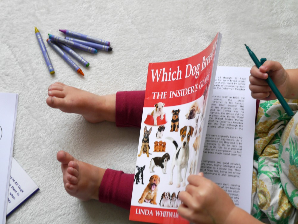 Pet drawings and dog books