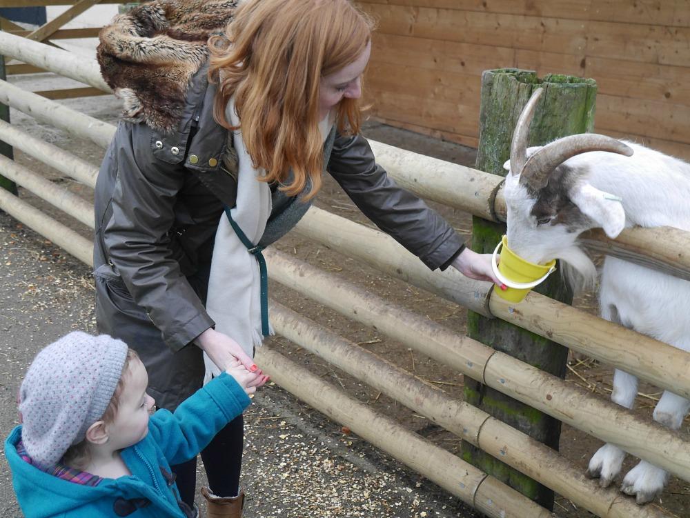 Animal feeding at Christmas Tree Farm, Kent