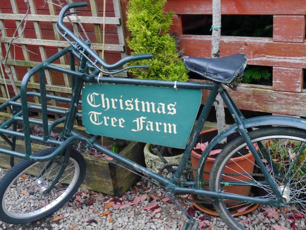 Bike at Christmas Tree Farm, Kent