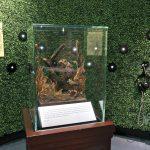 Florence-Nightingale-museum-owl
